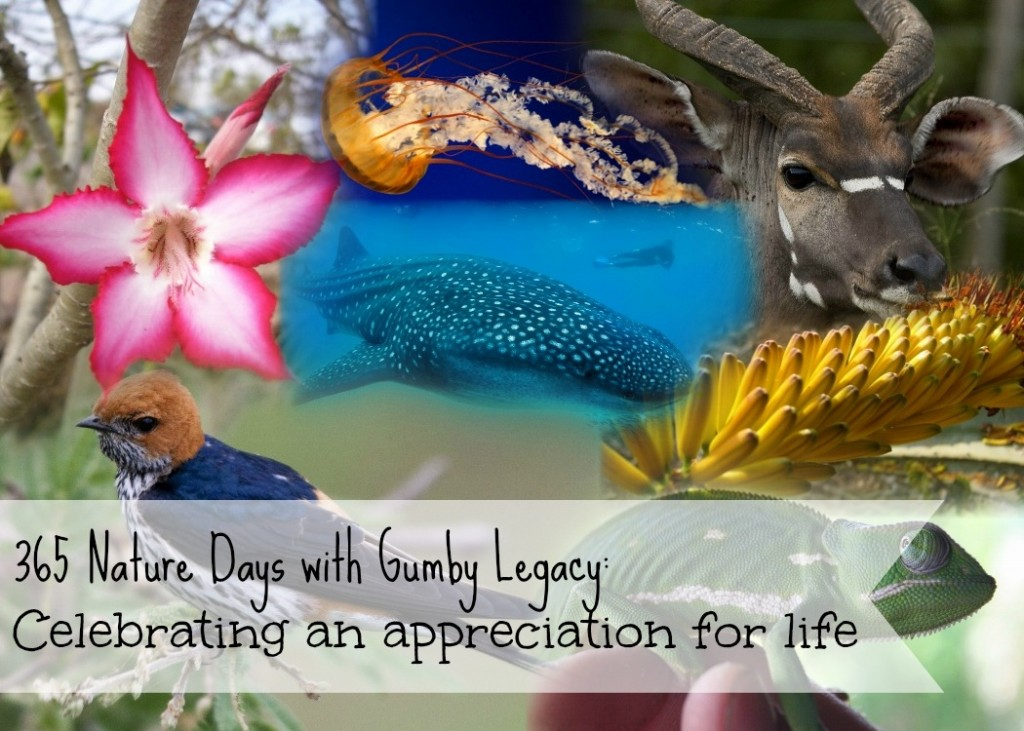 365 Nature days with Gumy Legacy: celebrating an appreciation for life. Bringing you all things wonderful, amazing and random that nature has to offer!