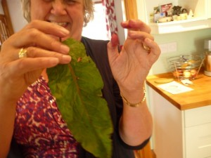 Marian with dock leaf after nasty stinging nettle sting on arm.