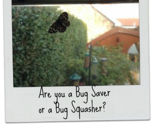 Are you a bug saver or a bug squasher?