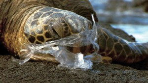 Turtles often mistake plastic bags for jellyfish, their staple diet.