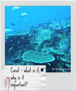Coral – what is it, how's it made, why is it important?
