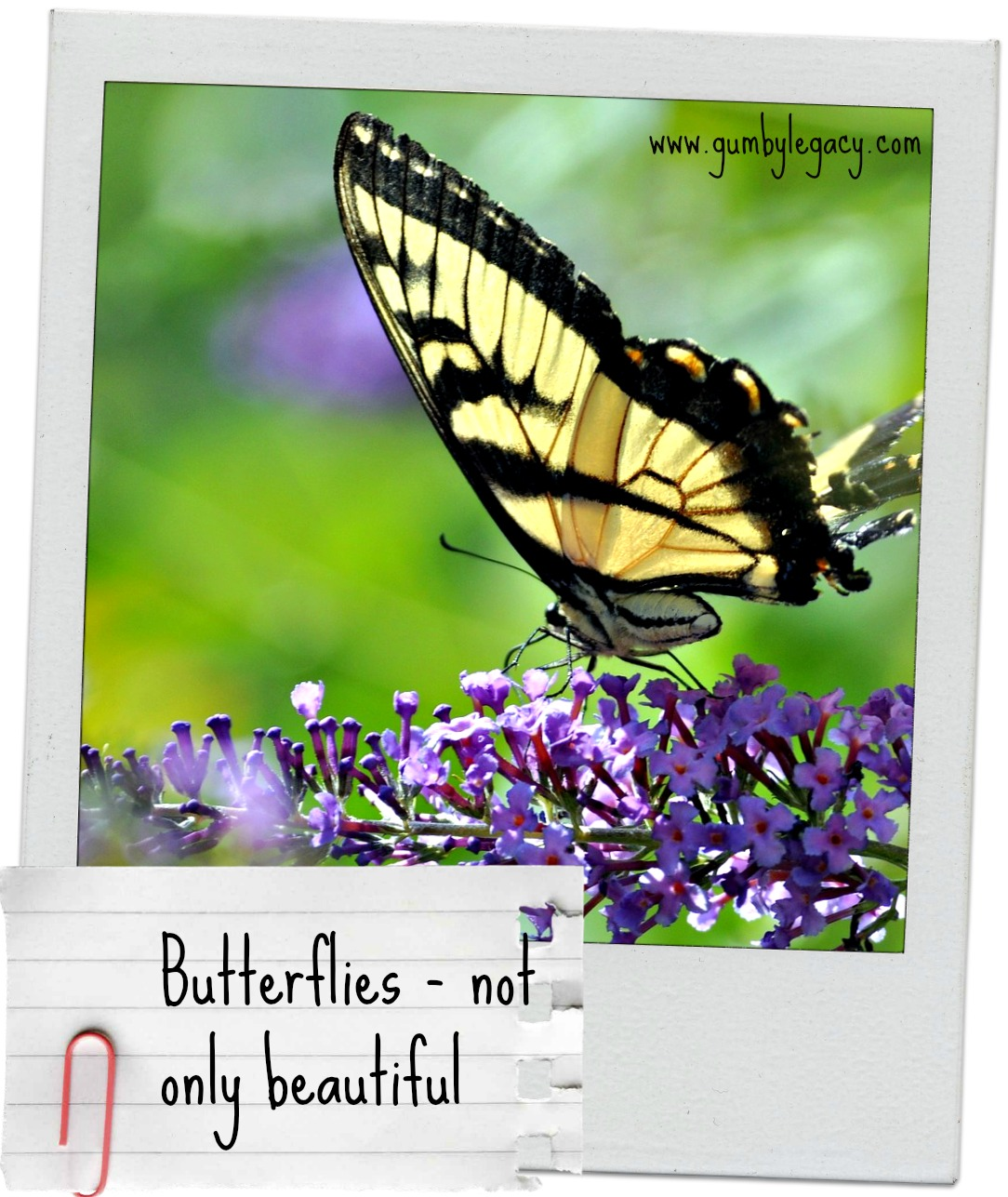 Butterflies not only beautiful but fascinating as well the butterflies not only beautiful but useful too biocorpaavc Gallery