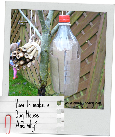 Step by step instructions on how to make a bug house with reasons why you should.
