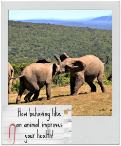 Learn from nature: how behaving like an animal could improve your health!