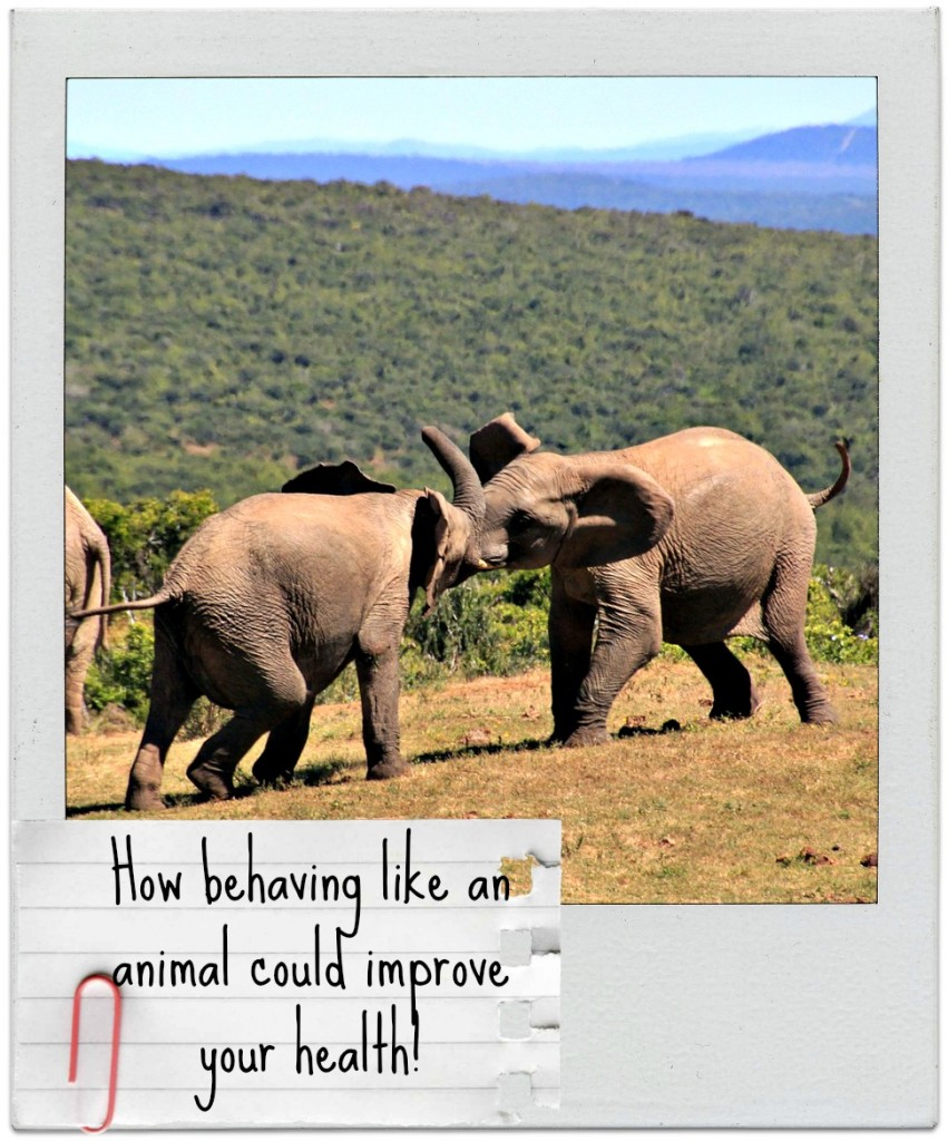 Learn from nature. How behaving like an animal could make us more healthy!