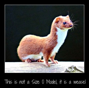 Wondering about weasels