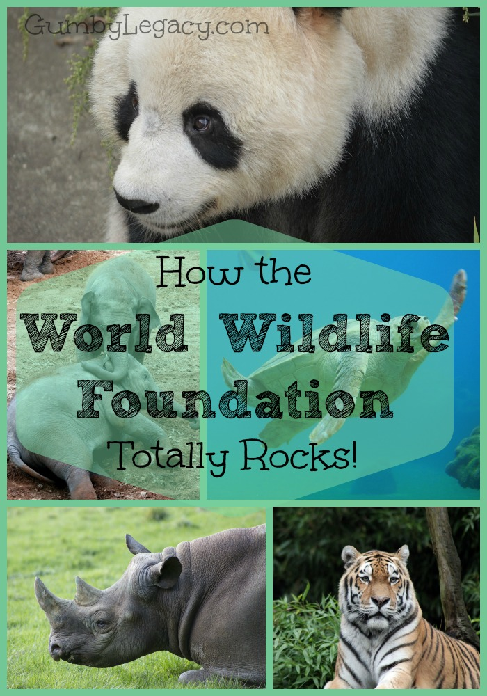 how the world wildlife foundation is totally awesome