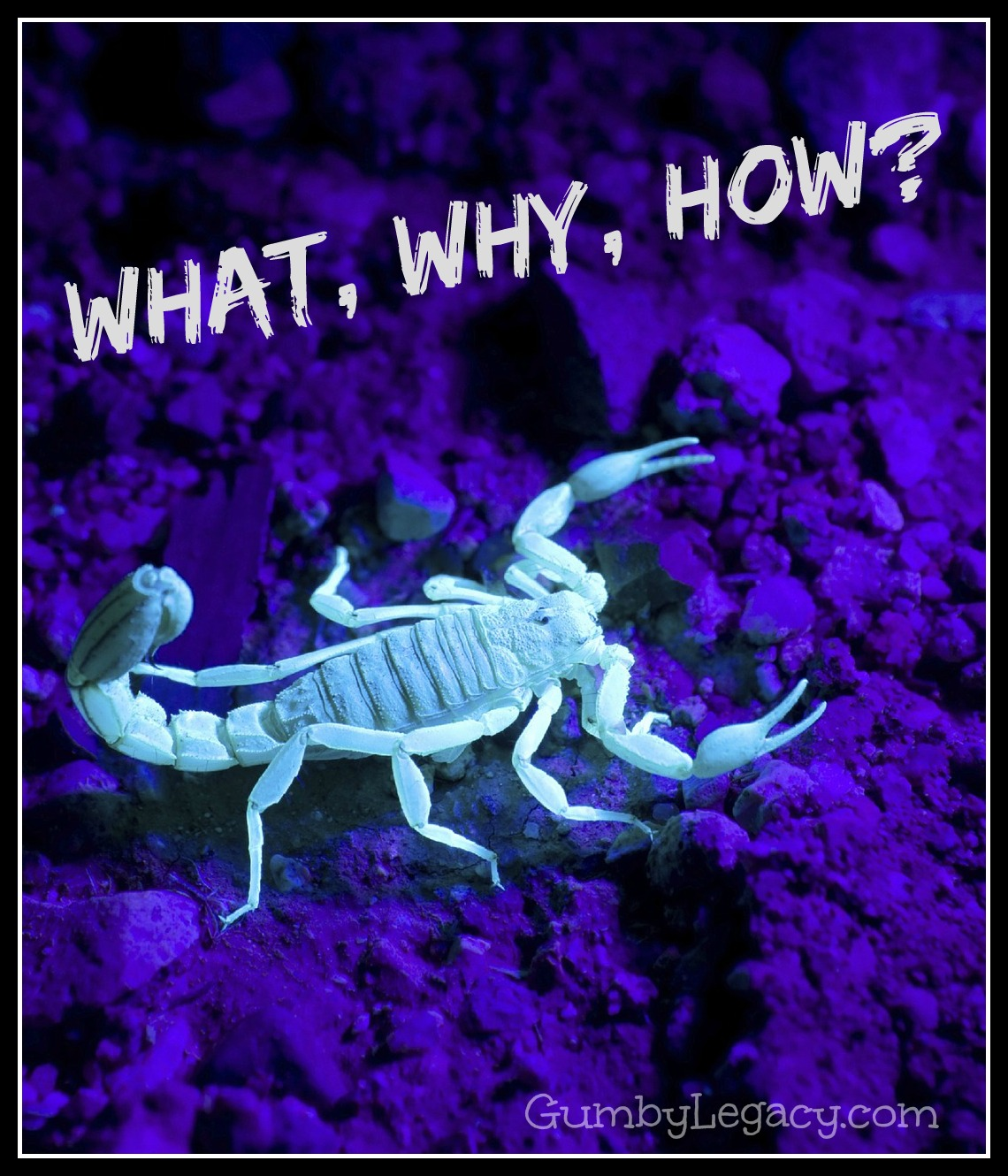 why do scorpions glow in the dark