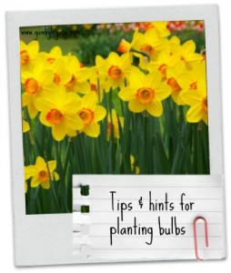 Tips & hints for planting bulbs