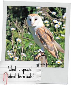What is special about Barn Owls?