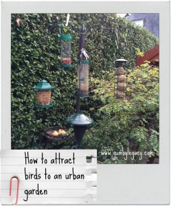 How to attract birds to your urban garden