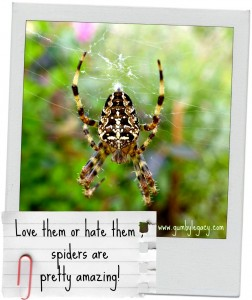 Love them or hate them – spiders are pretty amazing!